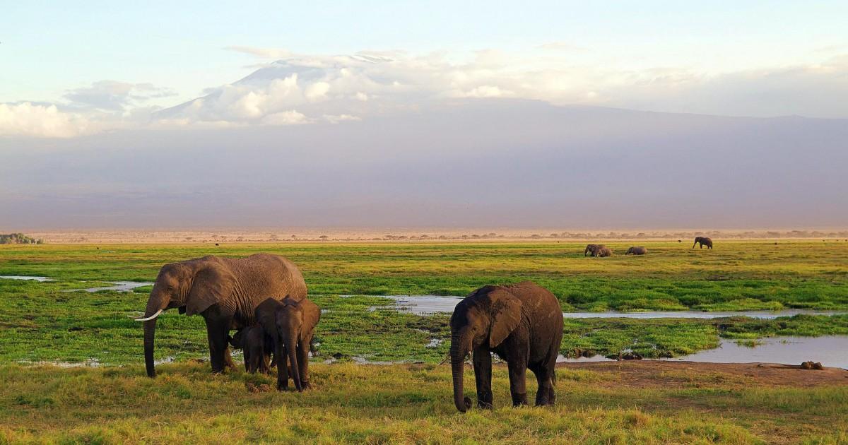 Nos conseils pour bien réussir sont premier safari au Kenya