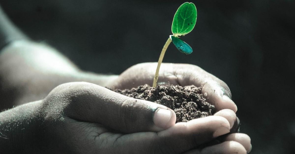 Santé : 10 plantes à utiliser pour votre bien-être et réduire votre stress